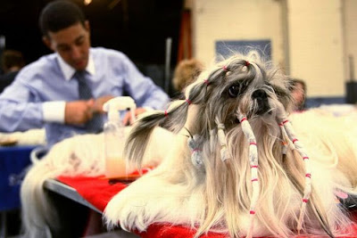 Worst Dog Haircuts Ever Seen On www.coolpicturegallery.net