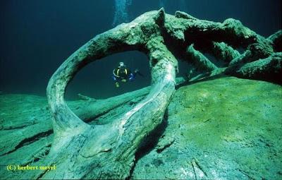 Beautiful Underwater Meadow