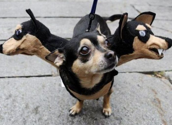 Fresh Pics: Crazy Halloween Costumes for Dogs