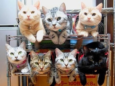 How to Organize Your Cats Seen On www.coolpicturegallery.us