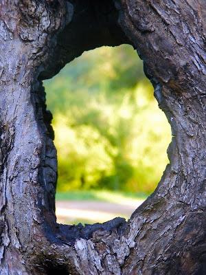 текстура, деревья, Uma Barzy