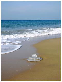 медуза, сезон медуз в Израиле