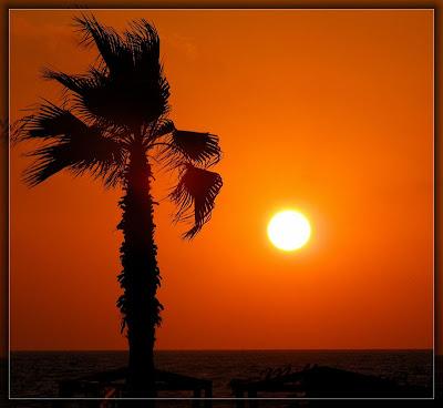 sunset, закат, пальма, пейзаж