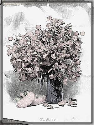 фото чёрно-белый натюрморт, Uma Barzy