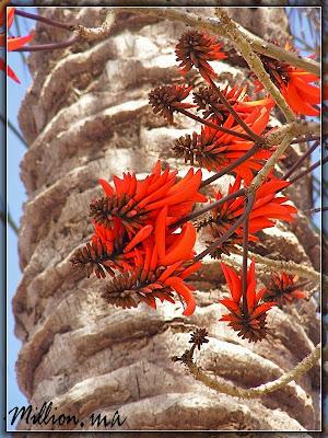 лохматый цветок