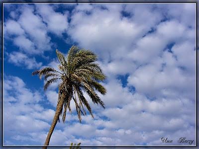 пальма на фоне неба