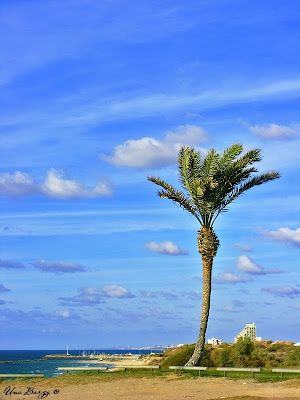 пальма и небо