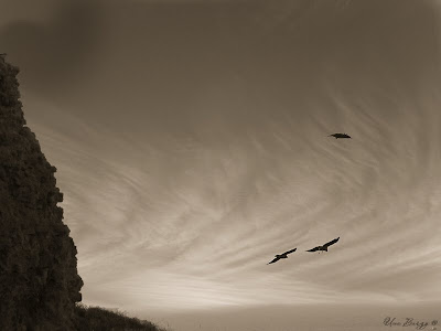 полёт птиц