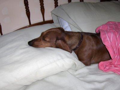 [sleeping+dog+Lorenza+1]