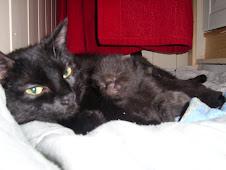 Silke er en snill og omsorgsfull mor. Om 7 uker kan du gjerne få med deg en hjem :o)