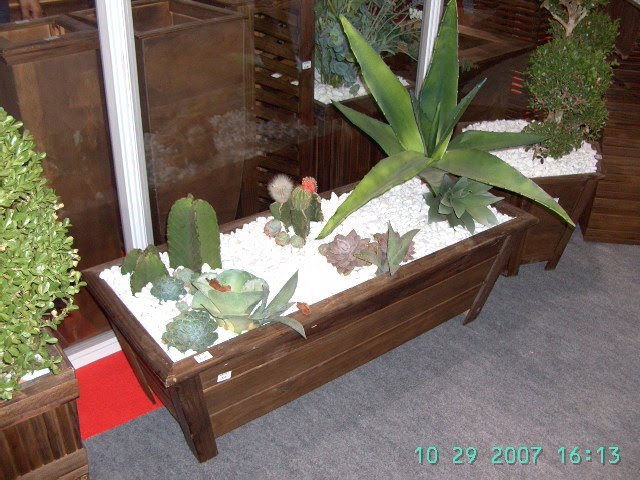 Mini jardim de cactos