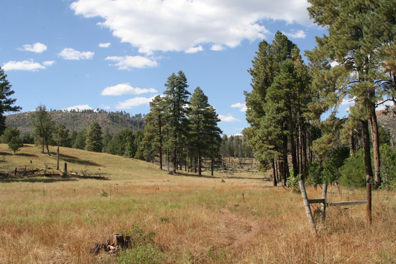 Canyon creek hatchery arizona autos weblog for Wooden nickel cabins