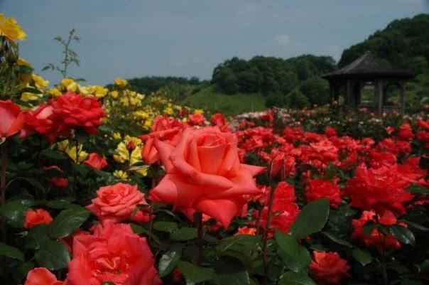 Un jardin de poemas el silencio de mi jardin - Un jardin para mi ...
