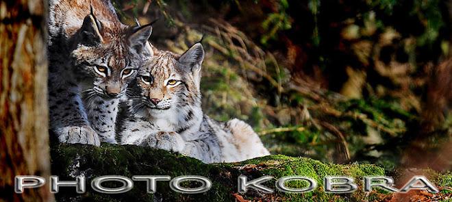 Photo KoBra