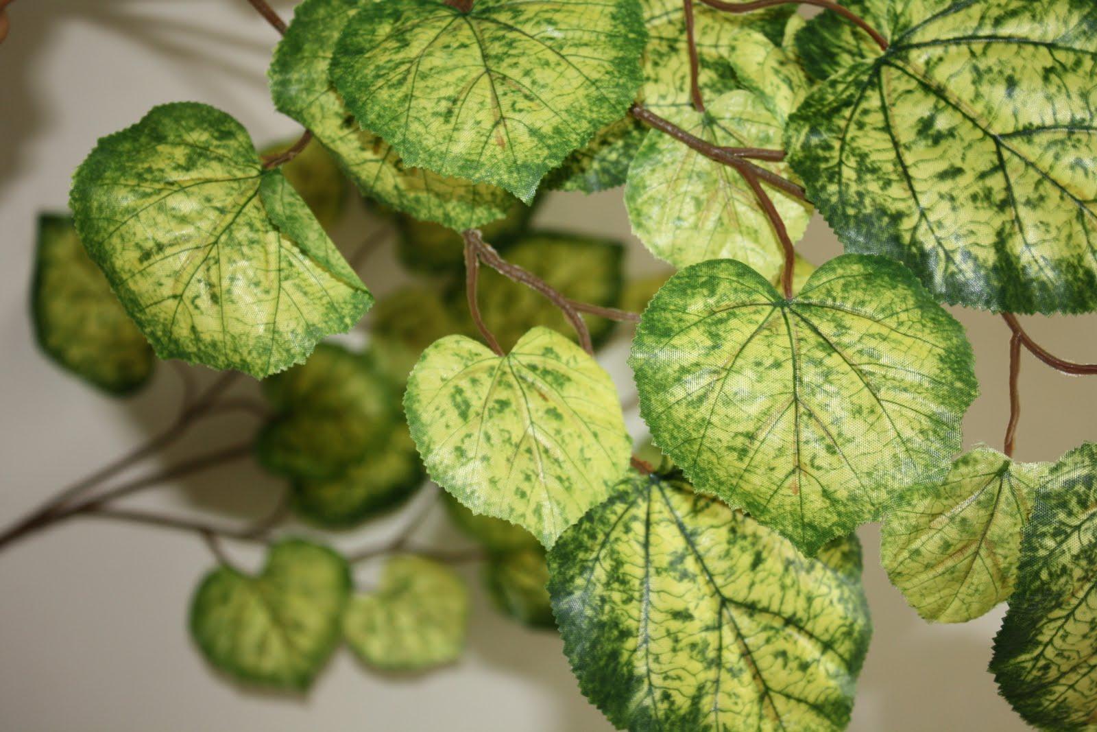 Pilihan perdagangan daun maple