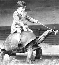Tortoise Polo