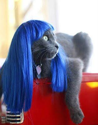 Animales cosplayando Cosplay-kitty-wigs-01