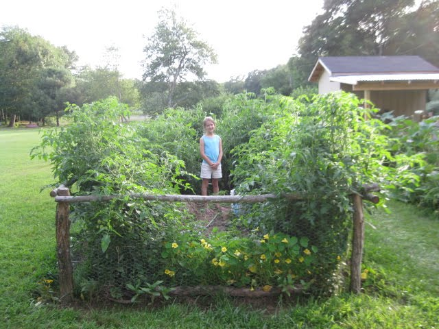 How to lasagna gardening method images frompo - Lasagna gardening in containers ...