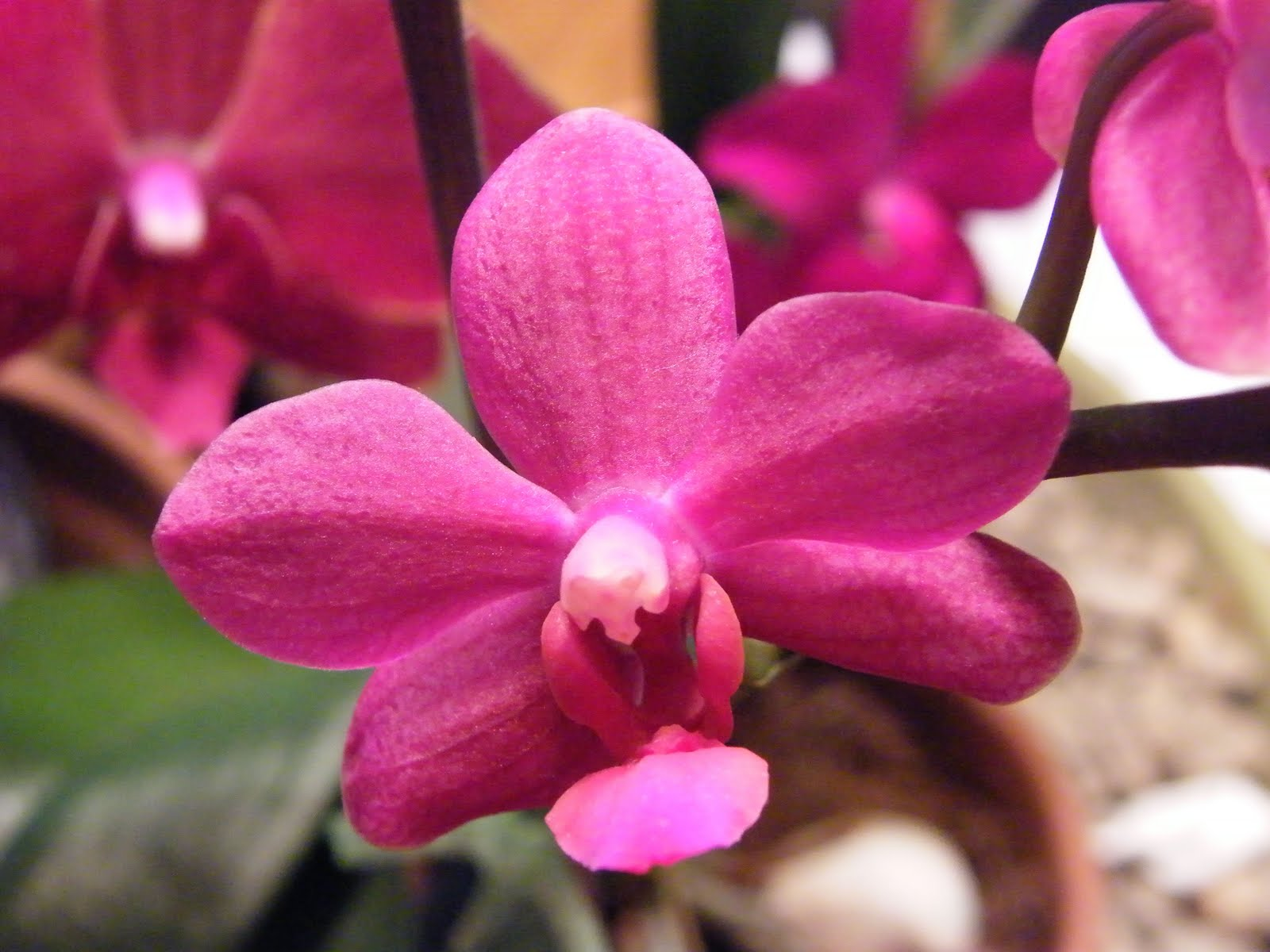 [PHAL.+Unknown]