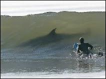 Ce spot pour surfeur est plutôt mal fréquenté. Non pas à réserver aux gourous de la planche, mais aux inconscients !
