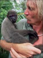 Marc van Roosmalen en compagnie de l'un de ses protégés. Document Hervé Collart/CORBIS SYGMA.