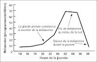 Cycle de la mélatonine.