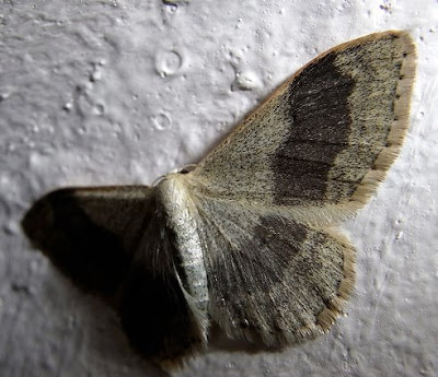moth on wall by photontrappist