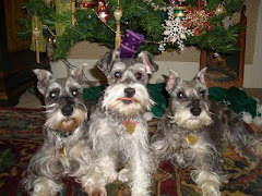 My Mini Schnauzer Girls
