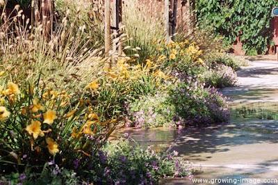 SanGeronimo-garden