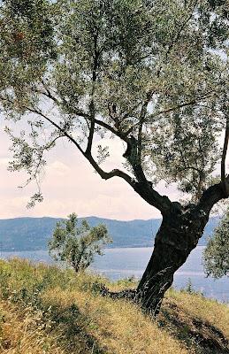 http://3.bp.blogspot.com/_GC71J66-iao/SG_vpvuHdyI/AAAAAAAAAB4/D7YLBxmFycE/s400/olivier-grece.jpg