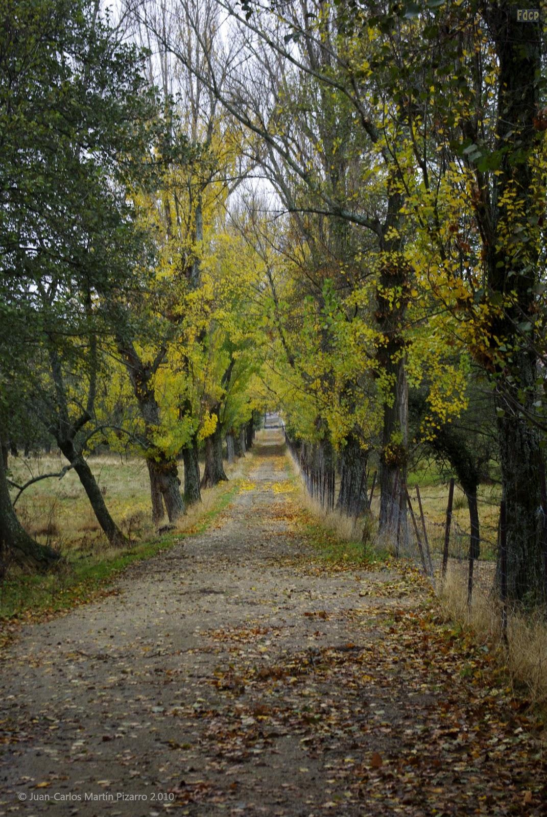 Fotos de cualquier parte el bosque y iv jardines y for Carson bosque y jardin