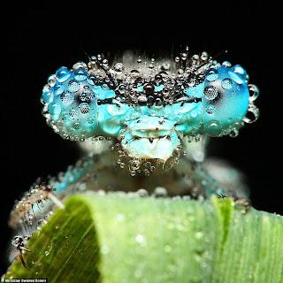 Serangga yang Mirip Makhluk Luar Angkasa