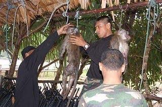 Sadis Tentara Makan Monyet