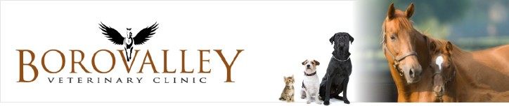 Borovalley Veterinary Clinic