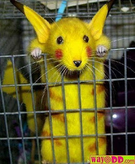 funny-pictures-pikachu-mouse-T2k.jpg