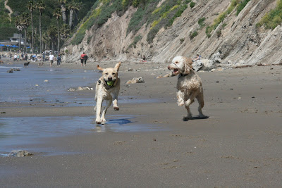 Dog beach fun