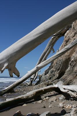 Hendry's Beach sun-bleached trees