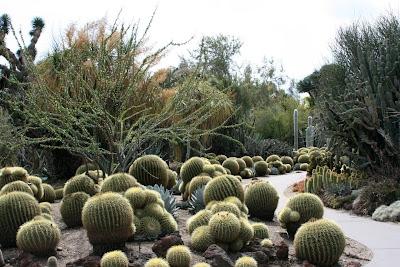 Huntington Desert Garden pathway