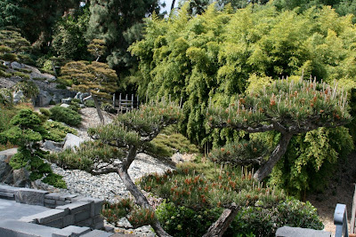 Huntington Japanese Garden trees and shrubs