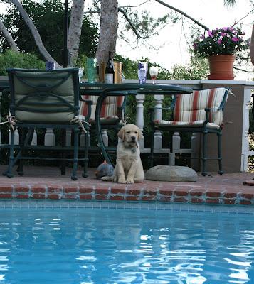Cooper poolside