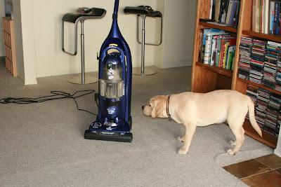 Cooper vs the vacuum cleaner