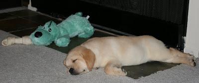 Cooper in Hollywood asleep at 8 weeks