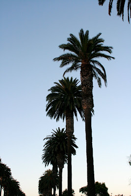 Palms near the Pacific Ocean in Santa Monica