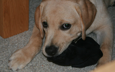 Cooper's first sock