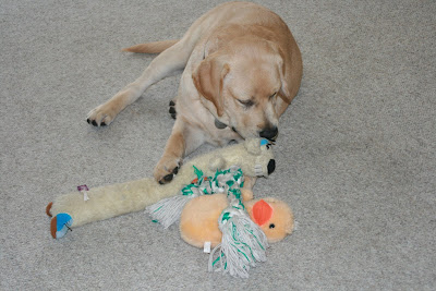 Cooper with his toys at 18 weeks