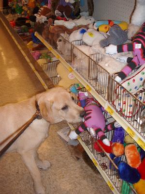 Cooper in dog heaven