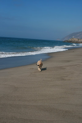 Cooper strolling down the beach