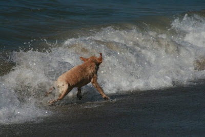 Dodging the waves