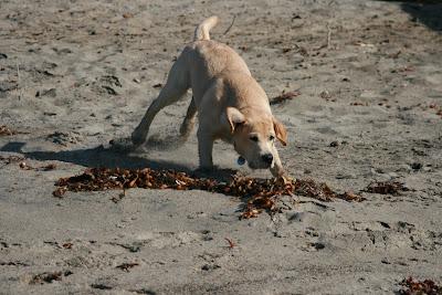Seaweed pup