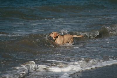 Wave pup